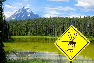 Ik vraag me af of de muggen echt zo groot zijn. van Reinhard  Pantke