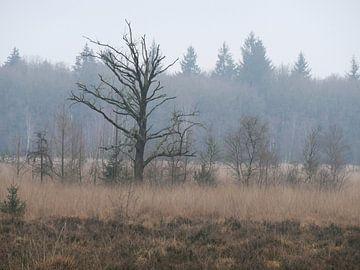 Eenzame kale boom in het bos van L Swinkels