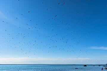 Schwalben am Himmel, Naturstrand Lobbeügen von GH Foto & Artdesign