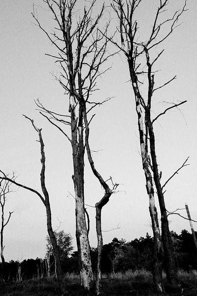 Bos van Erik Reijnders