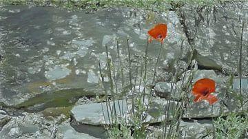 Mohnblumen auf ländlicher Mauer - Gemälde von Schildersatelier van der Ven