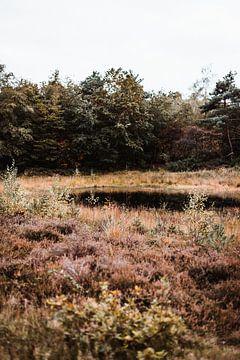 Kleine Niedermoore mit Heidekraut aus Twente von Holly Klein Oonk