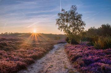 Guten Morgen Sonnenschein von Sander Rozemuller