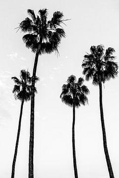Palmen schwarz-weiß von Malou van Gorp