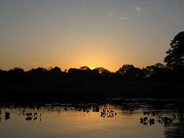 Pantanal Brazilië  van Bart Muller