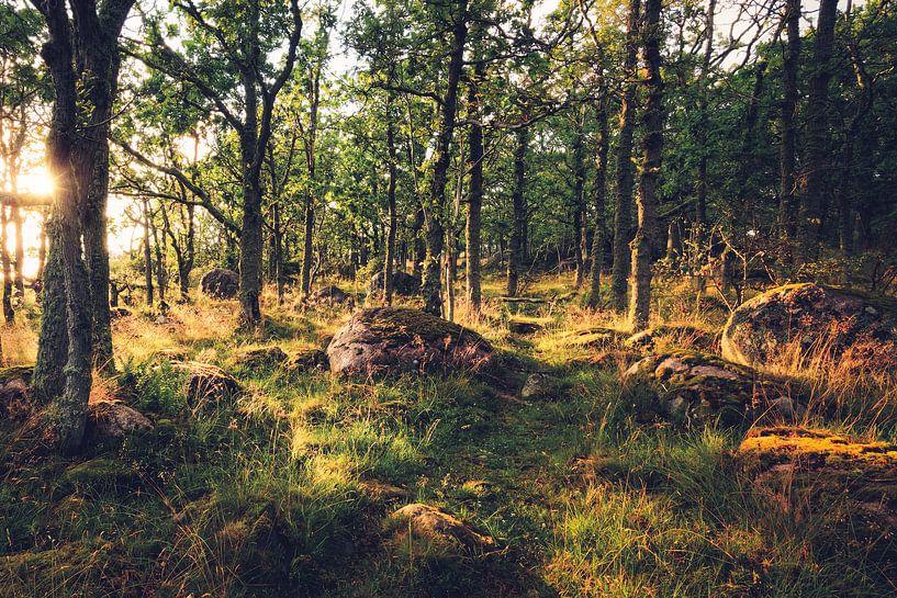Waldpfad in Schweden von Skyze Photography by André Stein