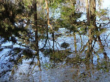 Echt, zo hoort ie: bomen in de spiegel. van Tineke Laverman