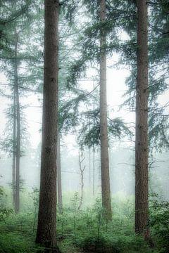 Dennenbomen van Connie de Graaf