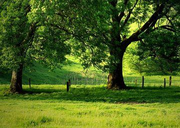 Bäume van Gabi Siebenhühner