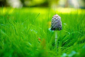The Proud Mushroom