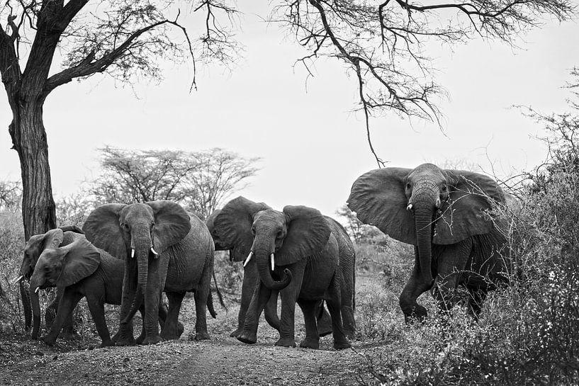 Achteruit - kudde olifanten van Lotje Hondius