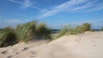 Duinlandschap van Ostsee Bilder