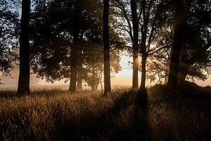 Eikenbos in Helvoirtse Broek bij zonsopkomst
