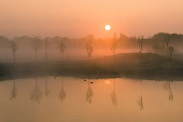 Kleine Bäume mit nebligem Sonnenaufgang, die sich im Teich spiegeln. von Koen Boelrijk Photography