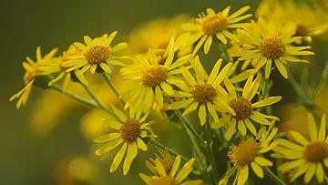 Gele bloempjes von Masselink Portfolio