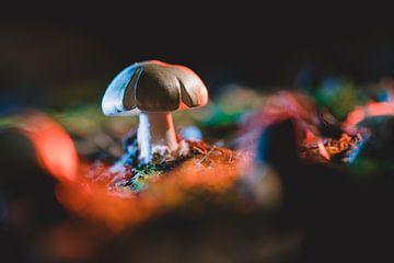 Kleine paddenstoel op e bosgrond in gekleurde licht