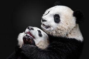 Pandas, Alessandro Catta