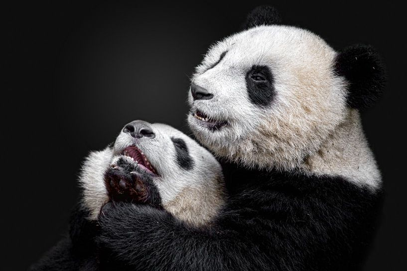 Pandas, Alessandro Catta von 1x