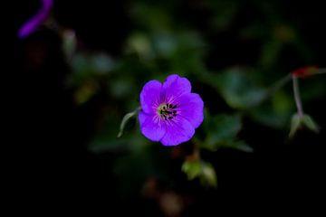 Bunte Blume von Photos by Francis