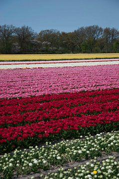 United colors of flowers II van Arthur Wijnen