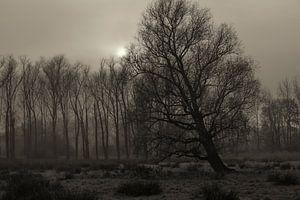 bomen, mist en zon van