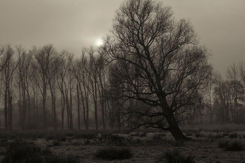 bomen, mist en zon van jan van de ven