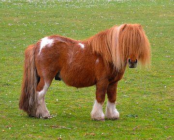 Pony van Theo van der Meer