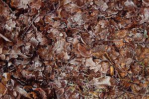 Winterse bladeren van