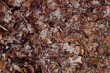 Winterse bladeren von Milou van den Bemd