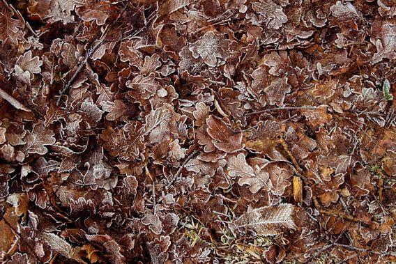 Winterse bladeren van Milou van den Bemd