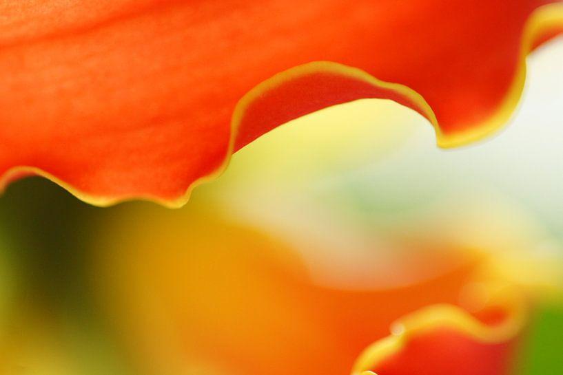 Orchids II van Carla Mesken-Dijkhoff