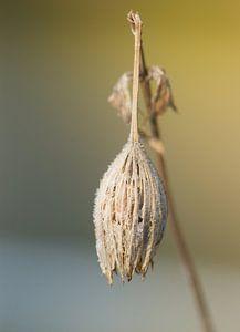 verlaten herfstbloem in de winter van Sandra Keereweer
