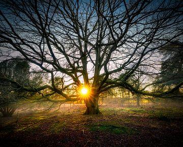 Sonnenuntergang bei einem Baum von Arjen Dijk