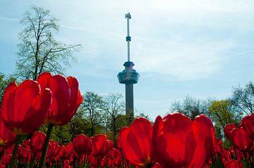 Tulpen in Rotterdam bij de Euromast van Thomas Poots