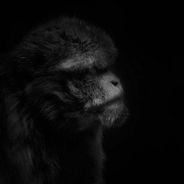 Brommende Berberaap van Ruud Peters
