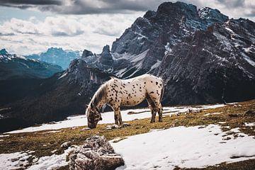 Paard hoog in de bergen van StephanvdLinde