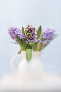 Hyacint sur Alexandra Bijl