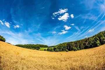 Sommerlandschaft mit Feldern, Wiesen und Wald von Günter Albers
