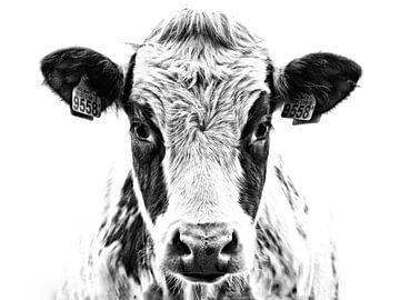 Portret van een nieuwsgierige koe in zwart-wit van