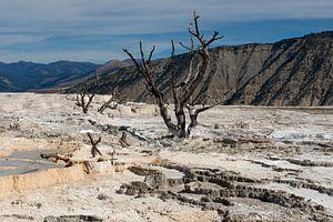 Mammoth hot springs Yellowstone NP van