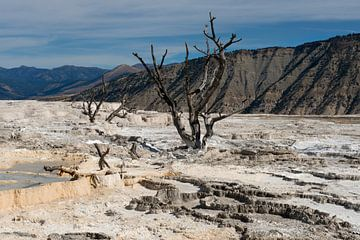 Mammoth Hot Springs Yellowstone NP von René Roelofsen