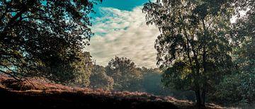 Panoramablick auf die Mookerheide von Bas Stijntjes