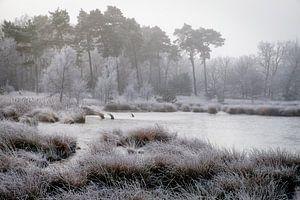 Winter bij het Kogelven op de Kampina van