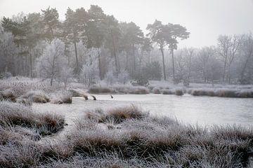 Winter bij het Kogelven op de Kampina von H Verdurmen