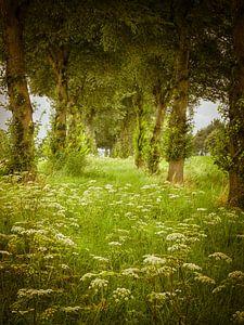 Wilde bloemen in Flevoland