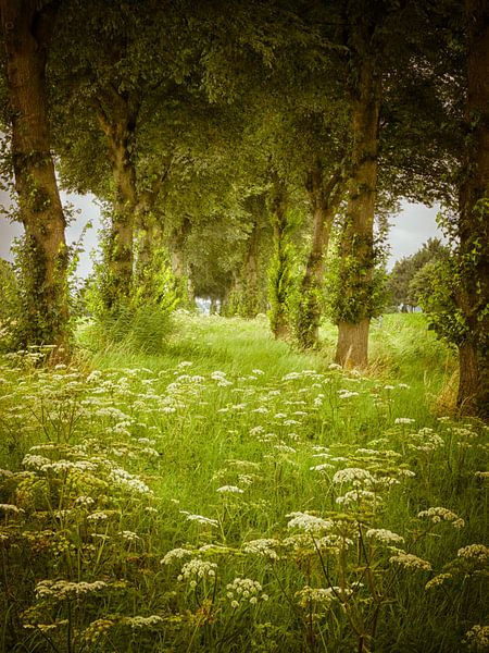 Wilde bloemen in Flevoland van Pascal Raymond Dorland