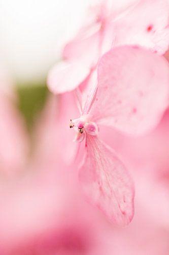 Hortus Botanicus | Botanical gardens of Leiden | flower | Pastel | Lensbaby fine Art Print