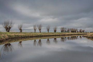 Wilgenbomen op een rij nabij het Friese dorp Sybrandahuus van Harrie Muis