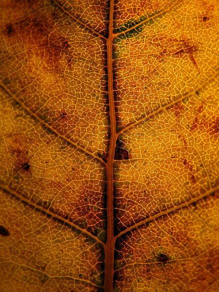 Oranje herfst van Vectorific Design