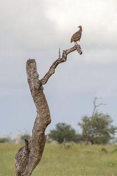 Wachturm im Kruger Park, Südafrika von Marijke Arends-Meiring